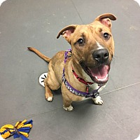 Adopt A Pet :: Nikki - Grayslake, IL