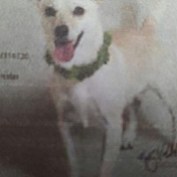 Adopt A Pet :: Flash - Yelm, WA