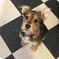 Adopt A Pet :: Calistoga - Houston, TX