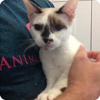 Adopt A Pet :: Bambi - Marina del Rey, CA