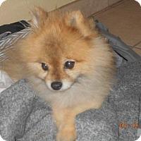 Adopt A Pet :: jojo - haslet, TX