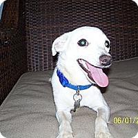 Adopt A Pet :: Casper - Andrews, TX