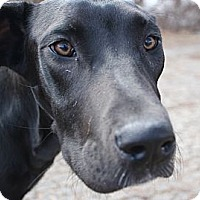 Adopt A Pet :: Zooey - Woodstock, IL