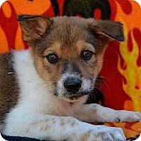 Adopt A Pet :: Mars - Garland, TX