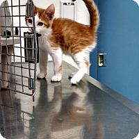 Adopt A Pet :: Dusty - Scottsdale, AZ