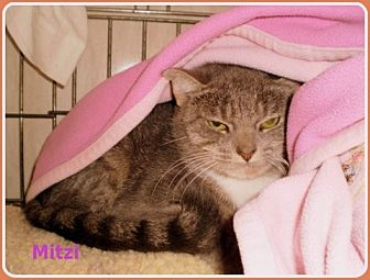 Domestic Shorthair Cat for adoption in Berkeley Springs, West Virginia - Mitzi