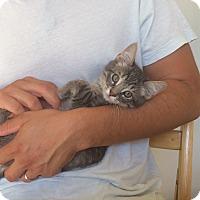 Adopt A Pet :: Luke and Christophe - Los Angeles, CA
