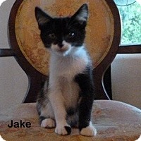 Adopt A Pet :: Jake - Portland, OR