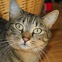 Adopt A Pet :: Newton - New York, NY