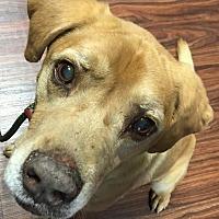 Adopt A Pet :: Mojo - Van Alstyne, TX