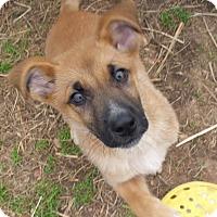 Adopt A Pet :: Finnegan - Albany, NY