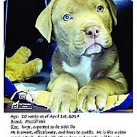 Adopt A Pet :: Lincoln - Ortonville, MI