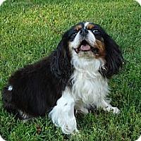 Adopt A Pet :: STAR - ROCKMART, GA