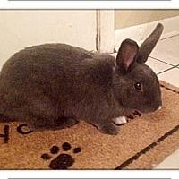 Adopt A Pet :: Ellie - Williston, FL