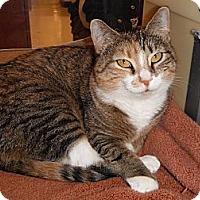 Adopt A Pet :: Priscilla - Jenkintown, PA