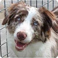Adopt A Pet :: Jessie - Orlando, FL