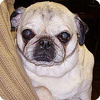 Adopt A Pet :: Paula - Hinckley, MN