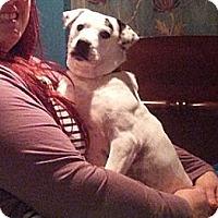 Adopt A Pet :: Charlotte - Hamilton, ON