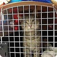 Adopt A Pet :: Roscoe - Walnut, IA