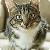 Adopt A Pet :: Nagisa - Chicago, IL