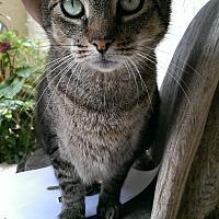 Adopt A Pet :: Simone - Naples, FL