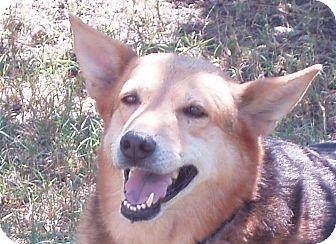 German Shepherd Dog Mix Dog for adoption in Dripping Springs, Texas - Laney