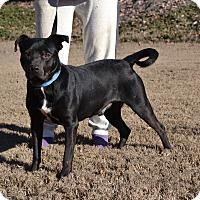 Terrier (Unknown Type, Medium) Mix Dog for adoption in Acworth, Georgia - Rinaldo