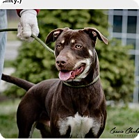 Adopt A Pet :: Dino - Urgent! - Zanesville, OH