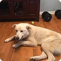 Adopt A Pet :: Donte - Laingsburg, MI