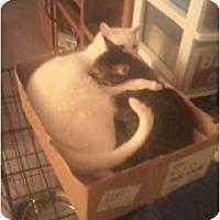 Adopt A Pet :: Zip - Little Rock, AR