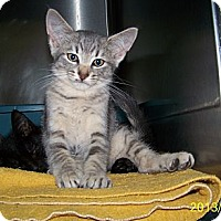 Adopt A Pet :: Chloe - Dover, OH