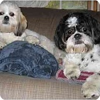 Adopt A Pet :: Errol and Olivia - Mays Landing, NJ