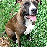 Adopt A Pet :: Tara - Mount Juliet, TN