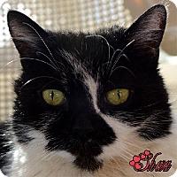 Adopt A Pet :: Sheva - Spring Valley, CA