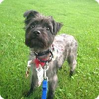Adopt A Pet :: Atreyu - Sinking Spring, PA