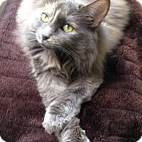 Adopt A Pet :: Mitzy - Los Angeles, CA