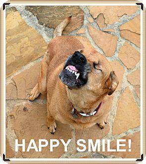 Labrador Retriever/Rhodesian Ridgeback Mix Dog for adoption in Olympia, Washington - Yuma - MUST SEE VIDEO!