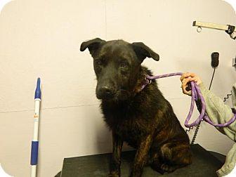 Labrador Retriever/Terrier (Unknown Type, Medium) Mix Dog for adoption in Waverly, Ohio - Herschel