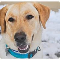 Adopt A Pet :: Ola - Broomfield, CO
