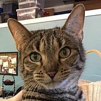 Adopt A Pet :: Willow - Dundee, MI