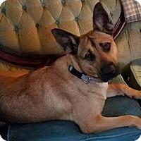 Adopt A Pet :: Isabelle - Richmond, VA