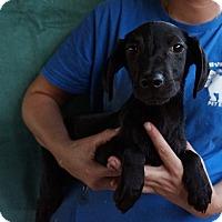 Adopt A Pet :: Sabrina - Oviedo, FL