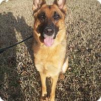 Adopt A Pet :: Delta - Louisville, KY