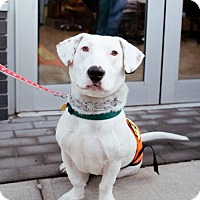 Adopt A Pet :: Bowtruckle - Brooklyn, NY