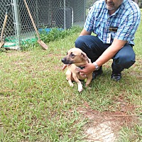 Adopt A Pet :: Gus - Marianna, FL