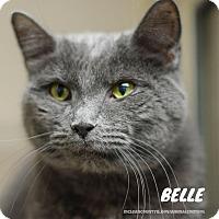 Adopt A Pet :: Belle - Hanna City, IL