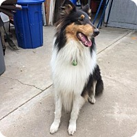 Adopt A Pet :: Cash - Riverside, CA