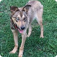 Adopt A Pet :: Trapper - Acworth, GA