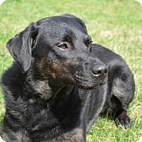 Adopt A Pet :: Cabela - Frederick, MD