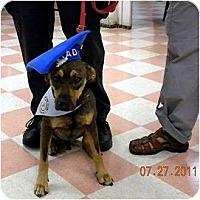 Adopt A Pet :: Rascal - Washington, NC